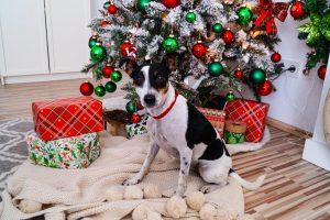 christmas, gift guide, doglover, gift guide for the dog, x-mas, gifts, gift giving, christmas tree, cute dog